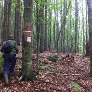 Amenajari forestiere